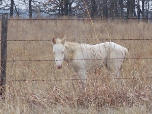 Colt in Osage County