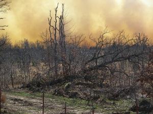 Wildfire near Pawhuska