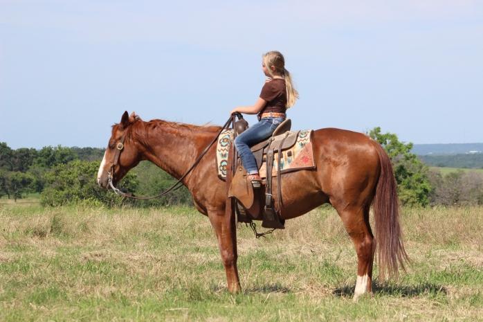 Gracie Stierwalt of Stierwalt Ranch held up cattle for the OCCA Tour.